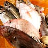 産地直送の鮮魚【全国各地】