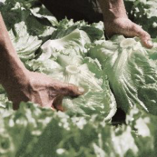 農家さんと話し合って生まれた野菜。