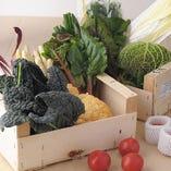 ビエトラやステッキオ、オニオンヌーボーなどのめずらしい野菜も取り寄せております
