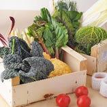 世界各地から取り寄せるいろいろな珍しいお野菜【山形県】