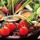 契約農家から届けられる新鮮美味な野菜