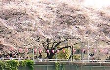 墨提公園前で優雅にお花見屋形船!