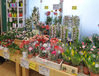 鉢植え・観葉植物