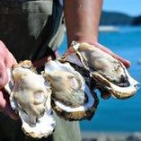 クリーミーな旨みが際立つ北海道仙鳳趾産の生牡蠣【北海道】