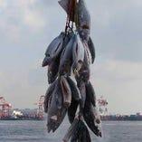 鮮魚は北海道や全国から毎朝直送!鮪は問屋より仕入れます!