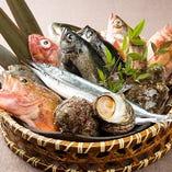 産地直送鮮魚【全国各地より】