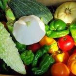 地元野菜、地元の人でも知らない新鮮野菜を提供できます!
