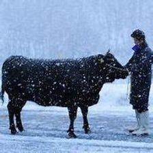 産地直送一等買い 尾花沢雪降り和牛