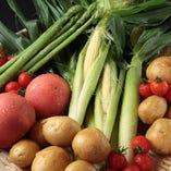 契約農家さんより新鮮なお野菜を届けて頂いております【千葉県】