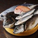函館市場直送!鮮魚【北海道】