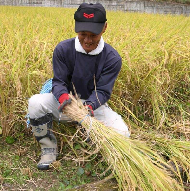 お米を自社の農業部門「明神ファーム」で作っています♪