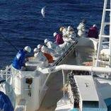 【9年連続漁獲高トップクラス】明神丸かつおの一本釣り