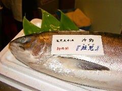 """おがの""""幻""""特集2 ■鮭児"""