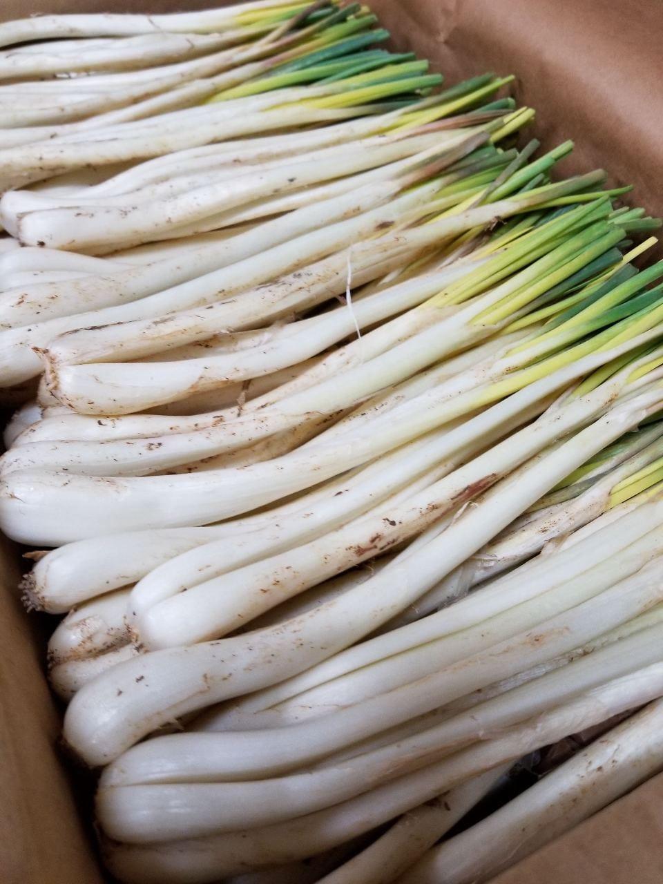 農家直送のこだわり野菜