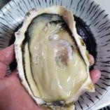赤崎産特大サイズ生牡蠣