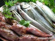 朝獲れ天然鮮魚
