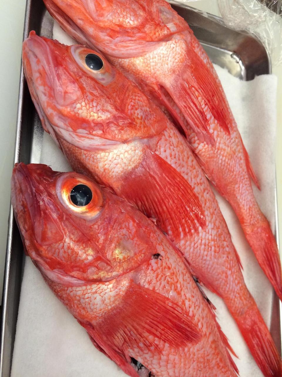 毎日オーナーの目利きで仕入れる鮮魚
