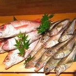獲れたての鮮魚を仕入れ、幅広い海鮮料理にしてご提供!