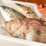 旬の鮮魚【神奈川県 佐島漁港など】