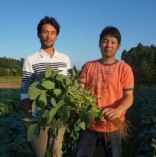毎日届く、季節の採れたて野菜【千葉県山武郡横芝光町】