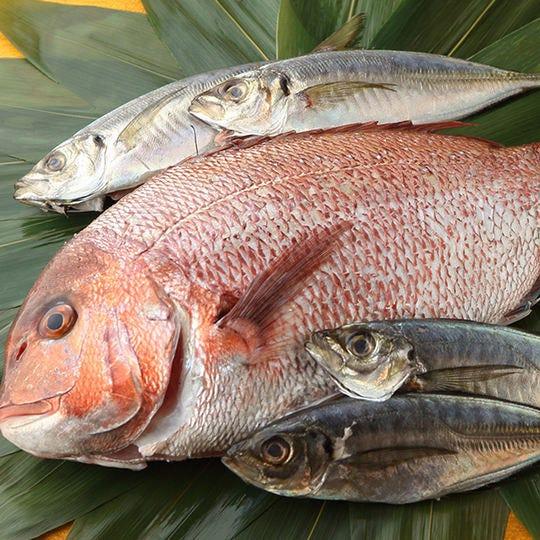 市場より直接仕入れた鮮魚を使用