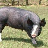 鹿児島県産黒豚【鹿児島県】