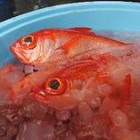 【魚貝】仲卸を通さず直接買い付け