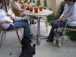 愛犬と一緒にゆっくりお食事