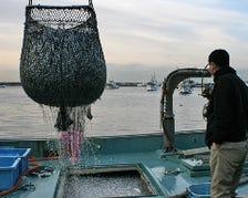 漁港直送の魚介を食べるなら鰓呼吸!!