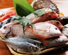産地直送の新鮮なお魚