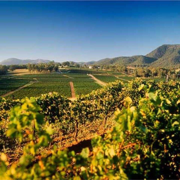 大自然の恵みをたっぷり受けて出来た良質なワインをご堪能あれ