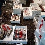 毎朝その季節の旬の魚介を厳選仕入れ。内容は毎日変わります!