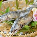 季節の逸品 鮎の天然塩焼き ※系列店舗のお料理です。