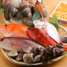 選び抜かれた鮮魚をふんだんに使用