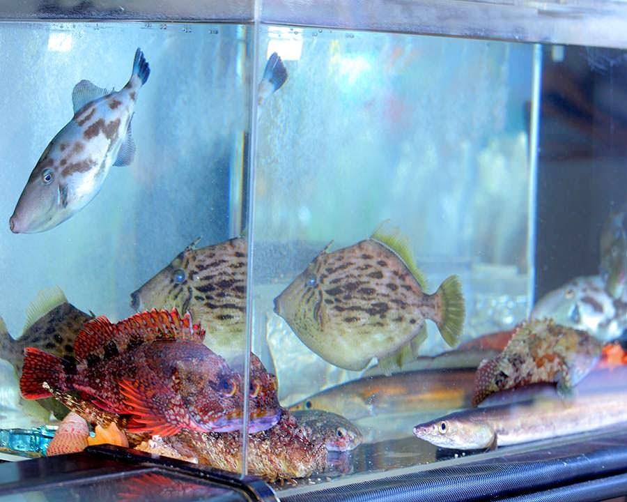 鮮度抜群!店内水槽で泳ぐ旬魚を堪能