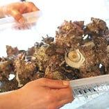 能登でしか食べられない、獲れたての活貝は鮮度抜群です!