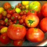 高知産トマト