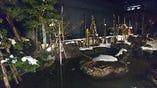 池には小千谷錦鯉が一年中遊泳してます。