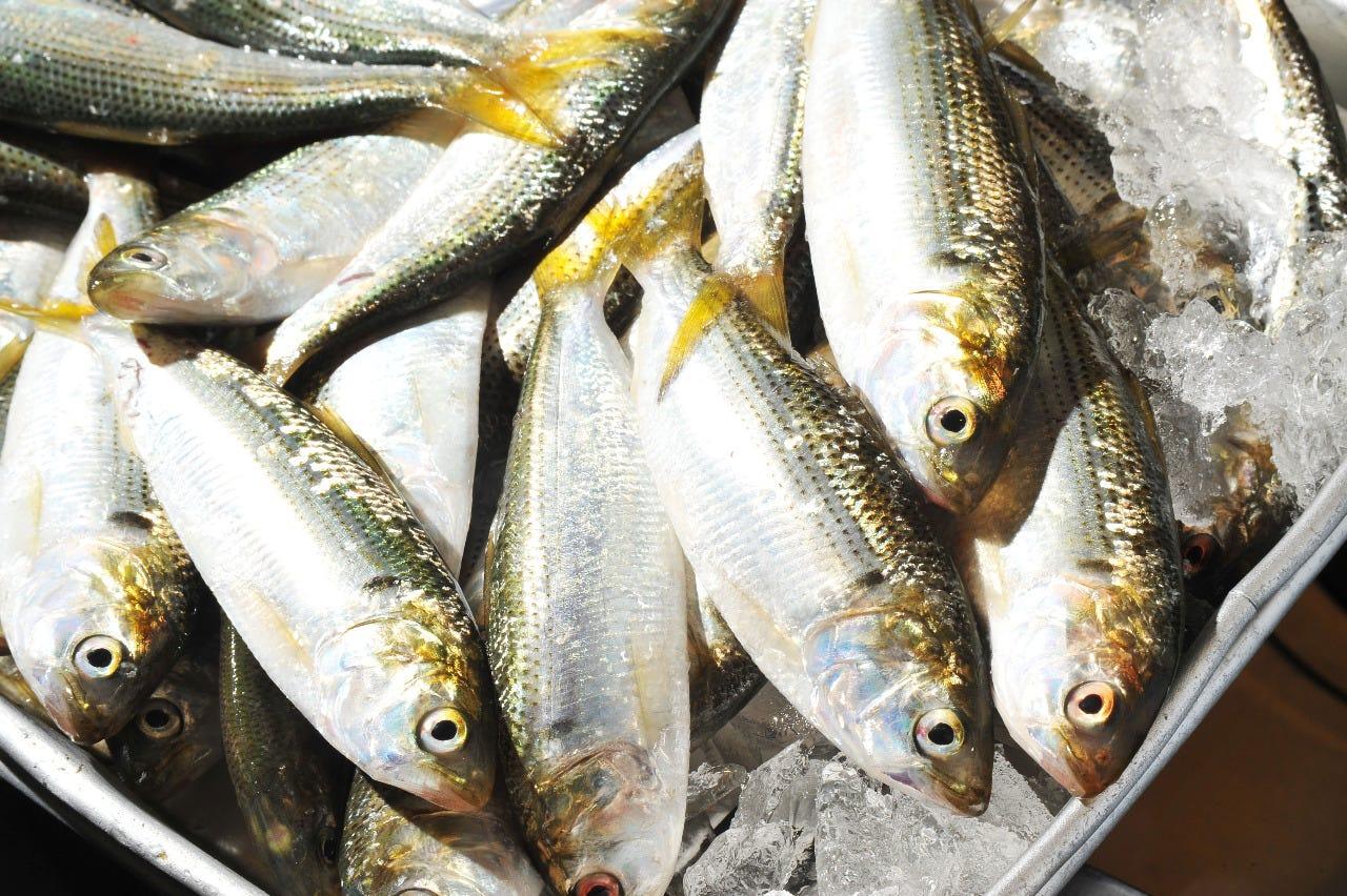 海に面した地の利を活かした旬の魚