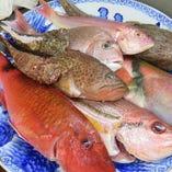 鮮度抜群の日替わり焼き魚御膳