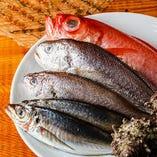 横浜~湘南~三浦まで神奈川県の新鮮鮮魚【神奈川県】