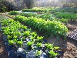 新鮮野菜&ハーブの採れるエツナの自家菜園