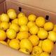 無農薬レモン入荷しております!