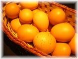 糸満産新鮮たまご「はっこう卵」【糸満市】