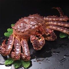 King crab MEN