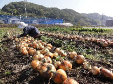 オーガニック自家農園の野菜を使用。