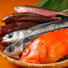 沖縄鮮魚を堪能!
