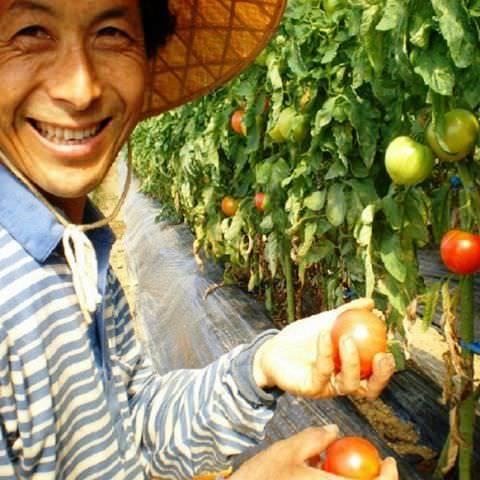 契約農家から仕入れる農薬不使用野菜