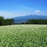 厳選した国内産の玄蕎麦【北海道雨竜町※季節により産地変わります】