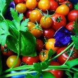 豊富な種類の野菜とスペイン料理